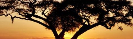 AfricaVision Online